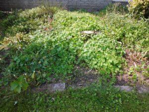 hovenierhelpt-den hollander groenvoorziening- nieuwendijk